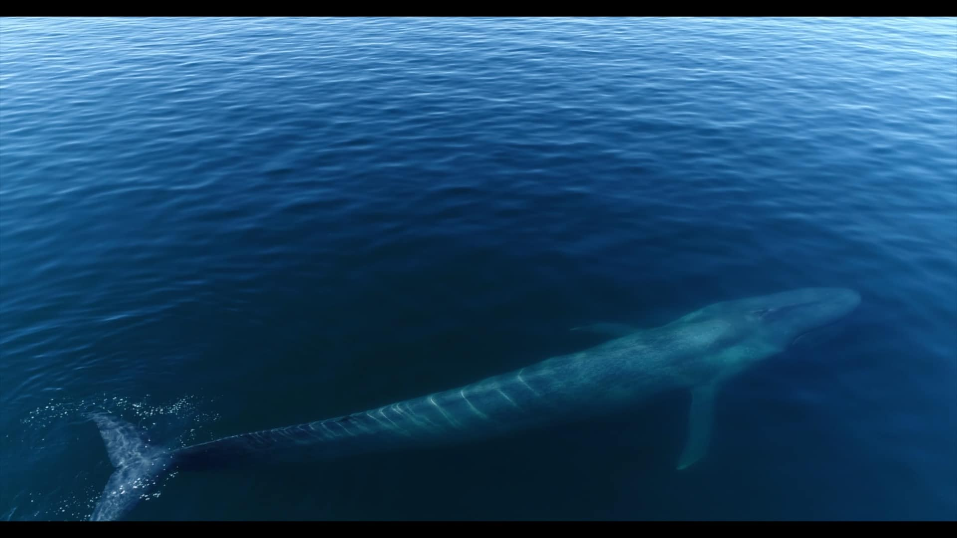 Blue Whale Festival Photographic Exhibition